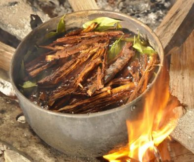 cha-de-ayahuasca